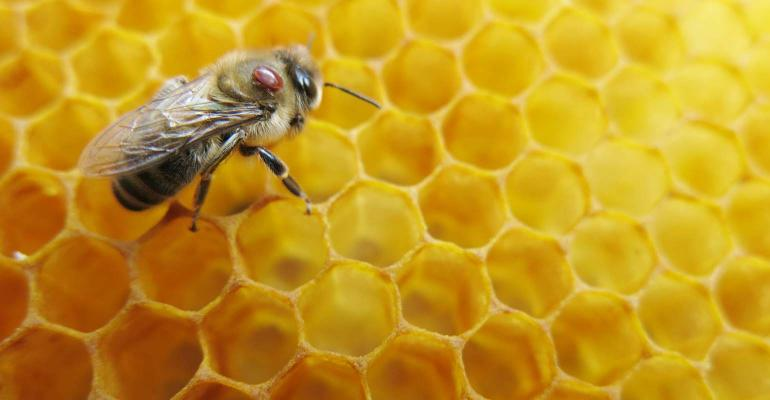 How bee venom can work for you