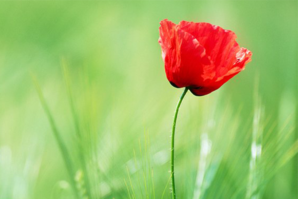 Article image for Australia pauses for Remembrance Day