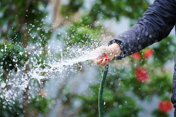 Tougher water restrictions imminent as Sydney's dams rapidly dry up