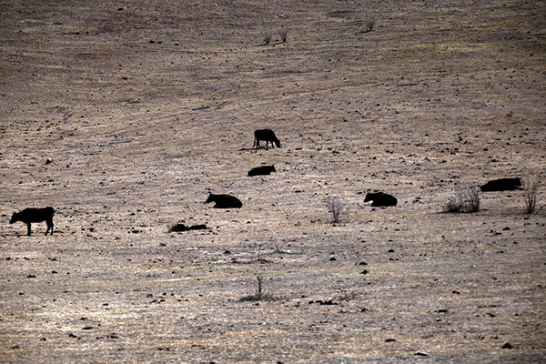 RSPCA defends seizing cattle from drought-stricken farmers