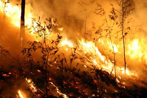 Article image for Greta resident relives terrifying moment a bushfire arrived on his doorstep