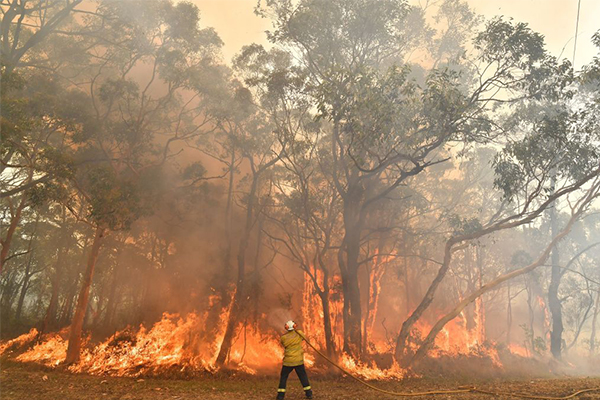 Dishonest Aussies rorting disaster relief payments meant for bushfire victims