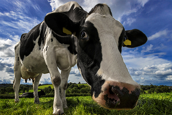 """Dairy Australia's """"Situation and Outlook"""" report"""