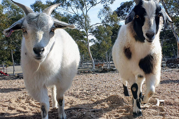 Article image for Generous 2GB listeners help desperate animal sanctuary through bushfire chaos