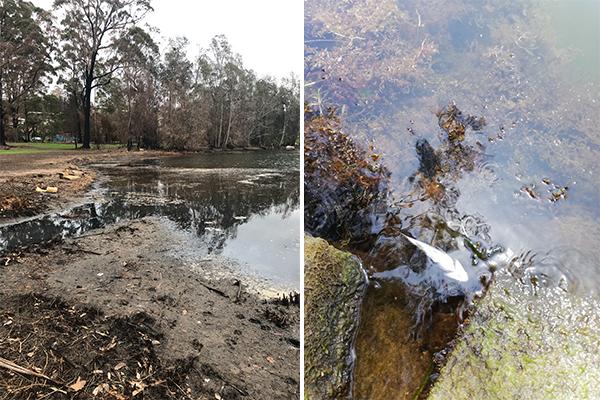 Article image for PHOTOS | Listeners reveal the disgusting state of once-thriving Lake Conjola