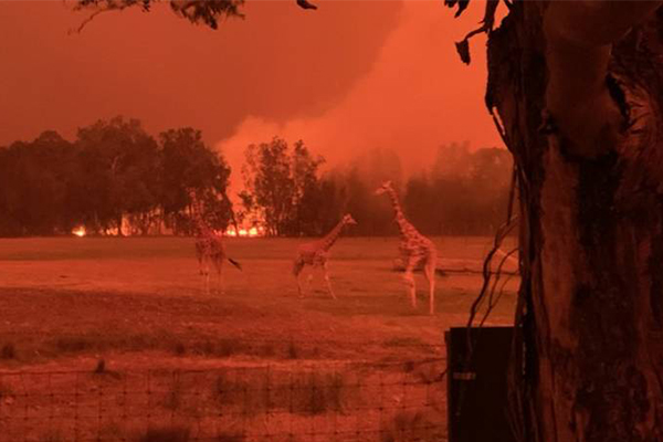 Article image for How Mogo Wildlife Park managed to save 200 animals from devastating fires