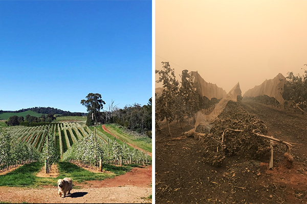 Article image for How a 'motley crew' of Batlow farmers banded together during the bushfires