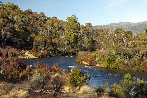 Article image for Cutting fuel load could reduce bushfire risk by next summer