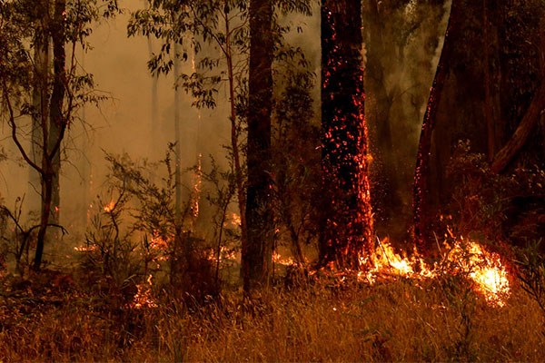 Article image for Climate change protest planned amid devastating bushfires