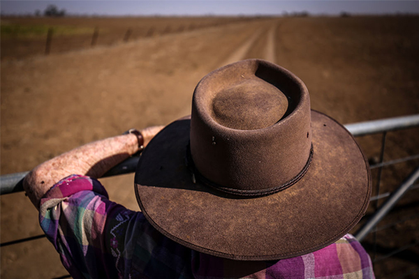 Article image for 'Dreadful' scam ripping off vulnerable, drought-stricken farmers