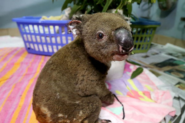 Millions of dollars flooding in to save Aussie wildlife