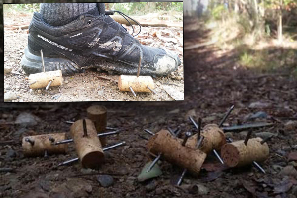 Gruesome booby traps found hidden on NSW running trail