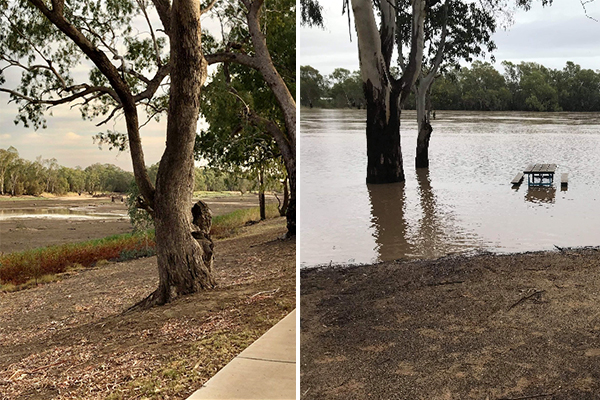 PHOTOS | The difference a bit of rain can have in just three weeks