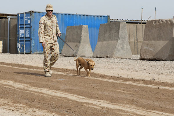 Military working dogs honoured with touching new memorial