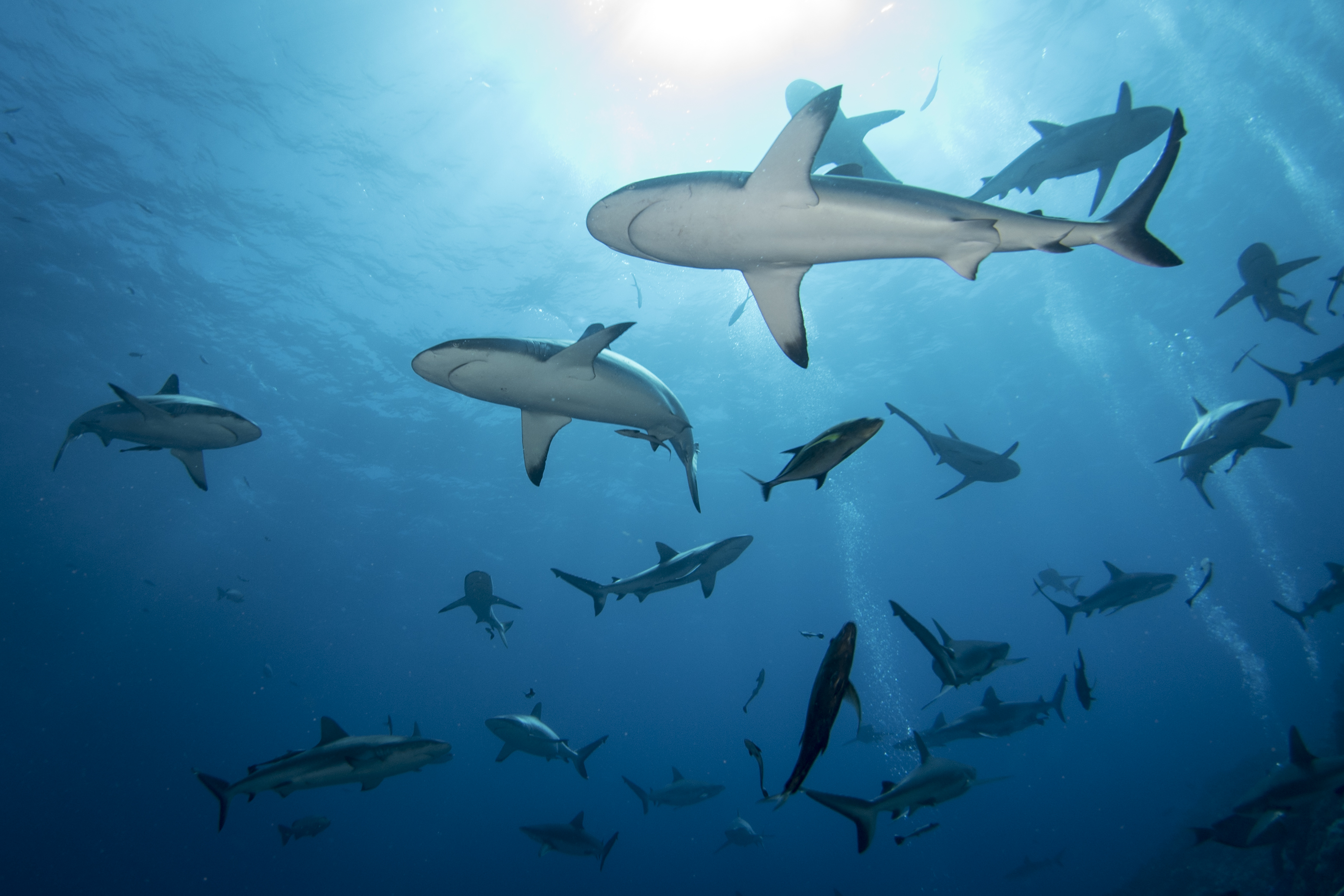 Article image for Shark control measures returning to Great Barrier Reef beaches