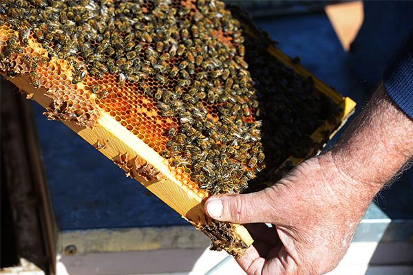 Australian beekeeping industry under threat following bushfire season