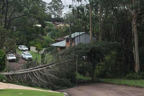 Article image for Ausgrid admits to cost cutting as 50,000 customers still without power after storms