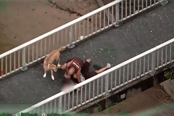Article image for WATCH   Dog-walker tackles man fleeing police