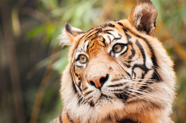 Taronga brings the zoo to you