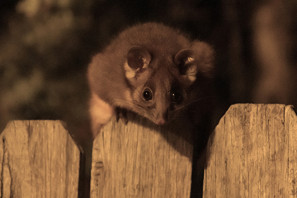 EXCLUSIVE | Extremely rare disease passed on by possum attack