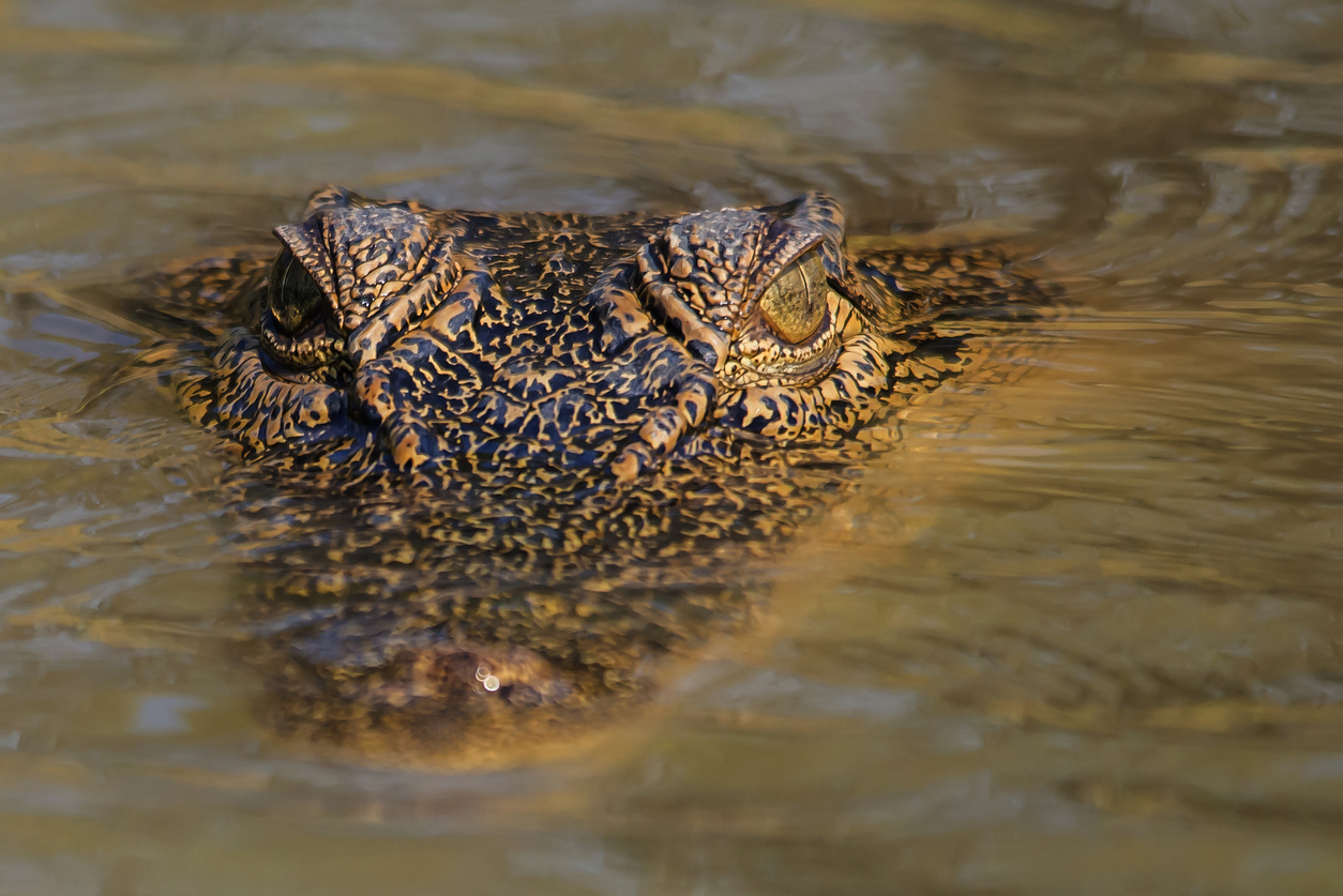 Meet Jayden, the beer stubby-wielding crocodile fighter
