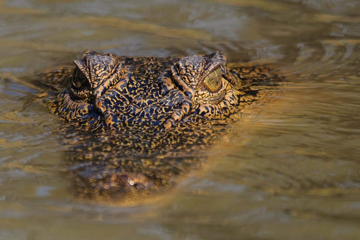 Article image for Meet Jayden, the beer stubby-wielding crocodile fighter