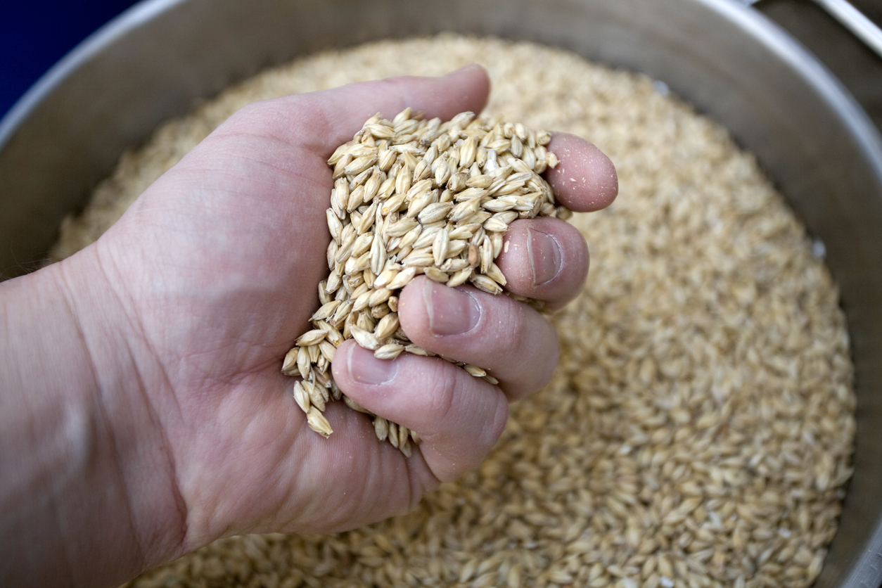 Article image for 'The timing is ironical': Grain industry doubtful over Chinese trade retribution