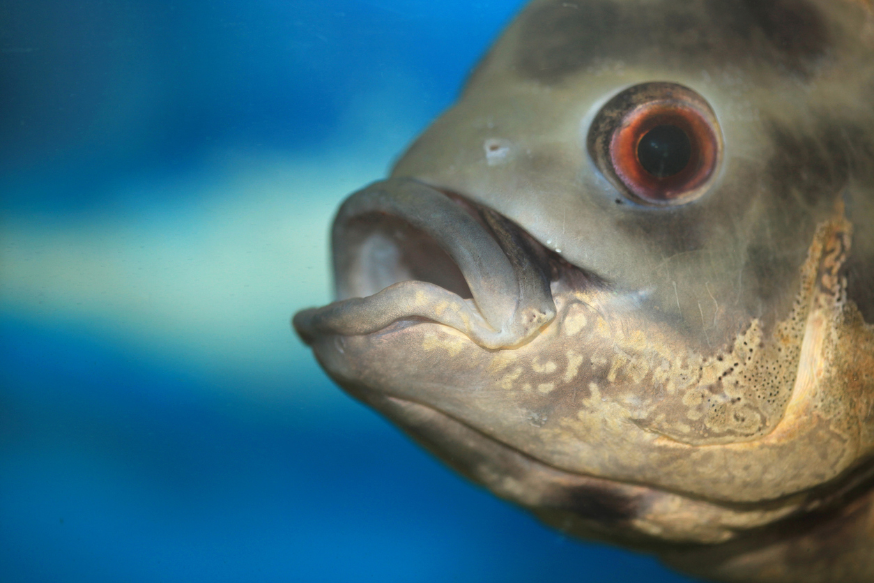 Article image for Animal activists ask restaurant to stop serving seafood in view of live fish