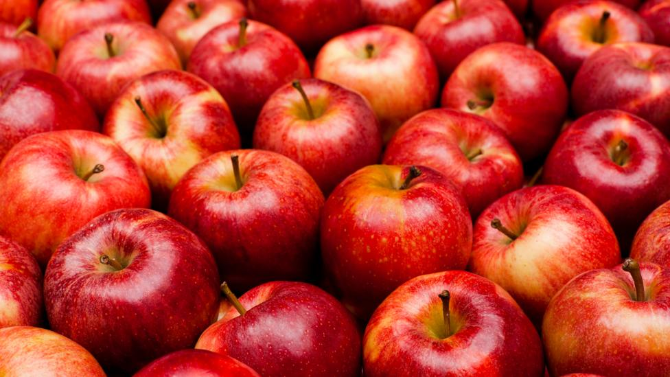 Apple Growers on Road to Recovery