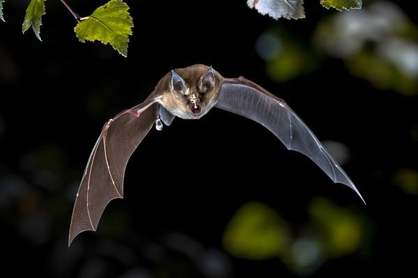 Unlocking bat secrets, we could live to age 200