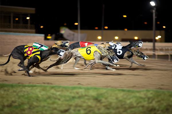 Article image for NSW greyhound industry gets animal welfare overhaul