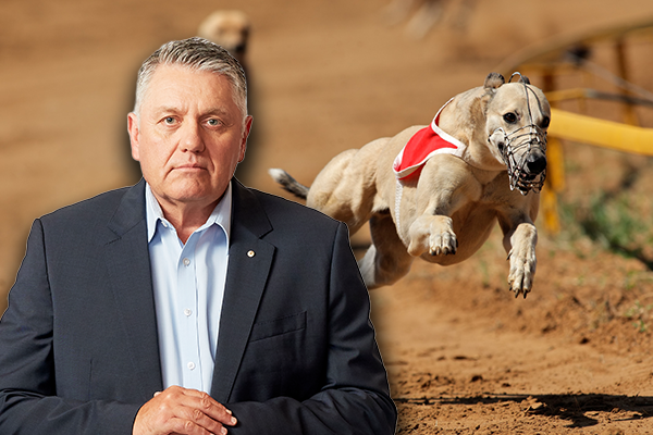 'Get rid of them!': Ray Hadley fires up over activists infiltrating greyhound integrity commission