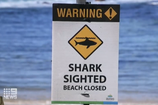 How to save someone from a shark attack