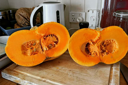 Article image for Farmer cultivates new easy to cut pumpkin variety, 11 years in the making