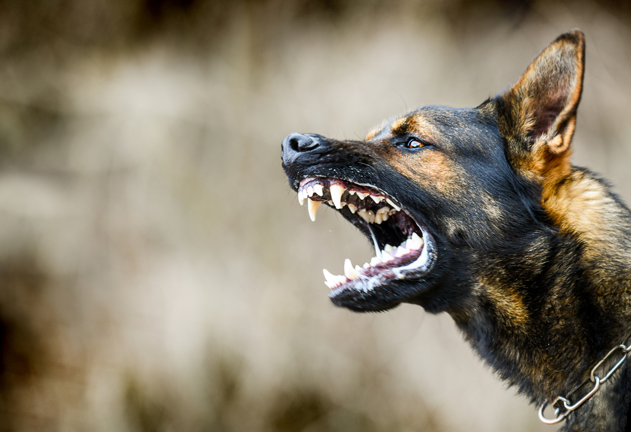 Wagga Wagga woman charged for coughing and releasing dogs on police