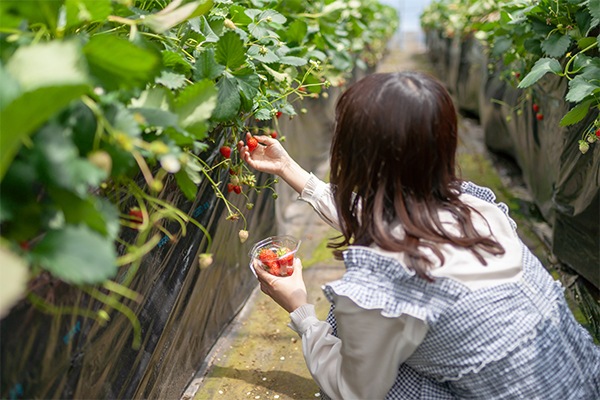 Article image for Young Aussies urged to spend gap year picking fruit