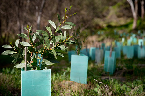 Article image for Australia's devastating bushfires drive pharmaceutical giant to go green