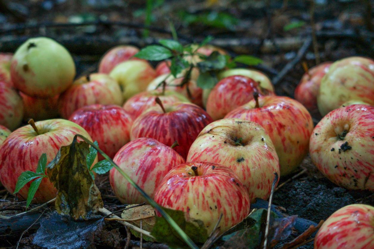 Fruit farmer fuming over Daniel Andrews' failure to heed warnings