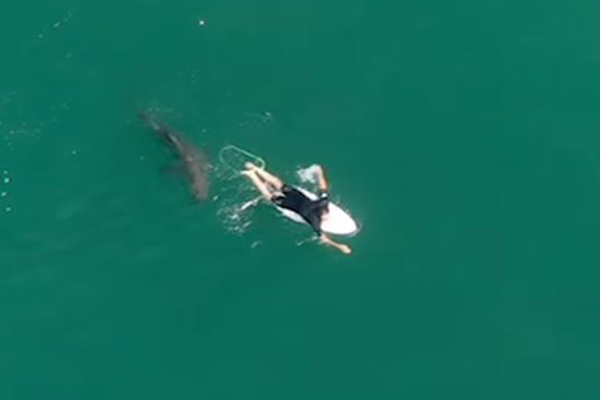 Article image for Drone alerts oblivious surfer to circling shark