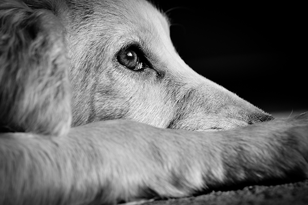 Article image for 'Weak penalities' for animal cruelty under the spotlight