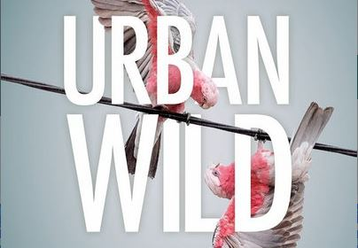 Article image for Urban Wild