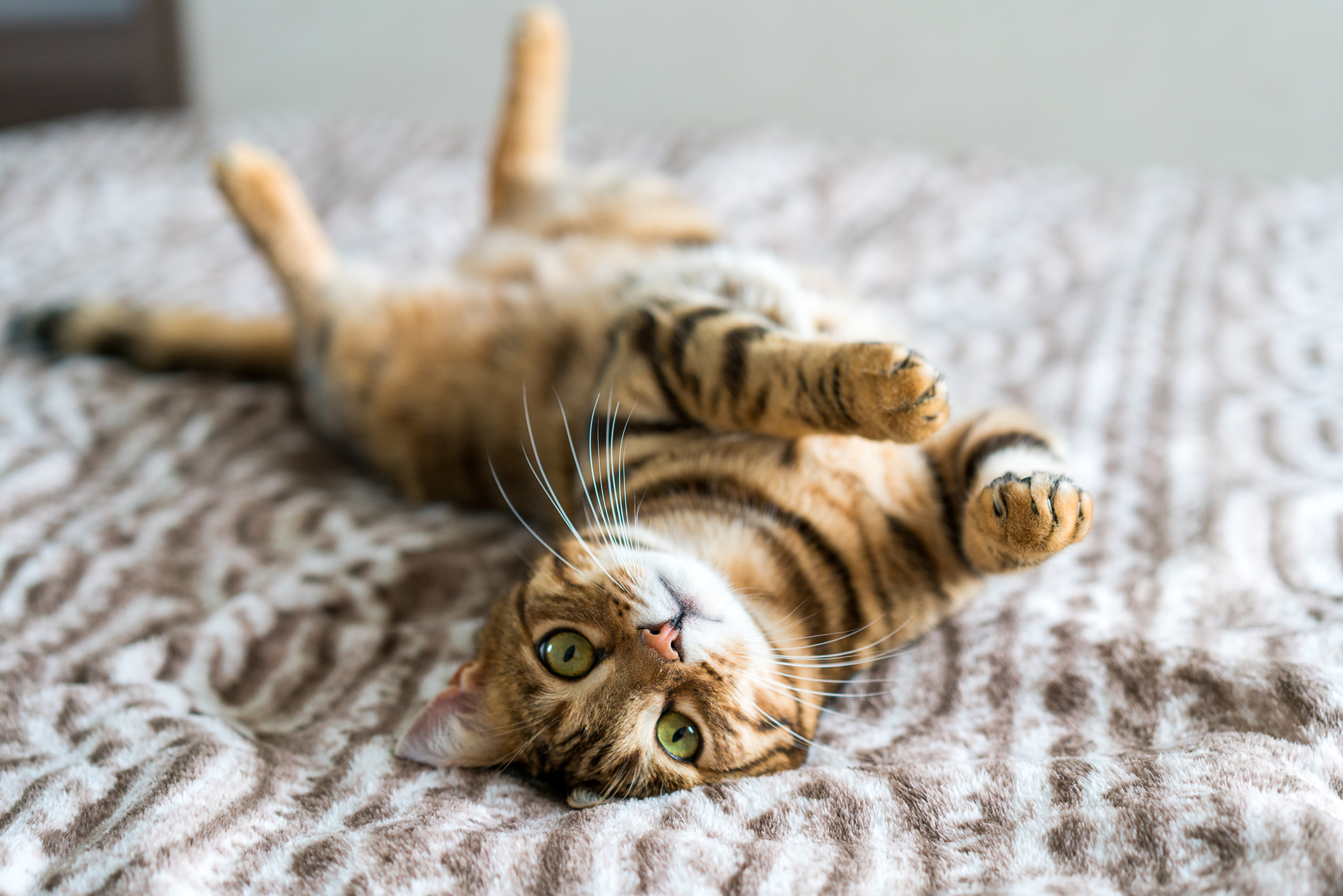 'From feral to fabulous': Cat lady's purrfect finishing school