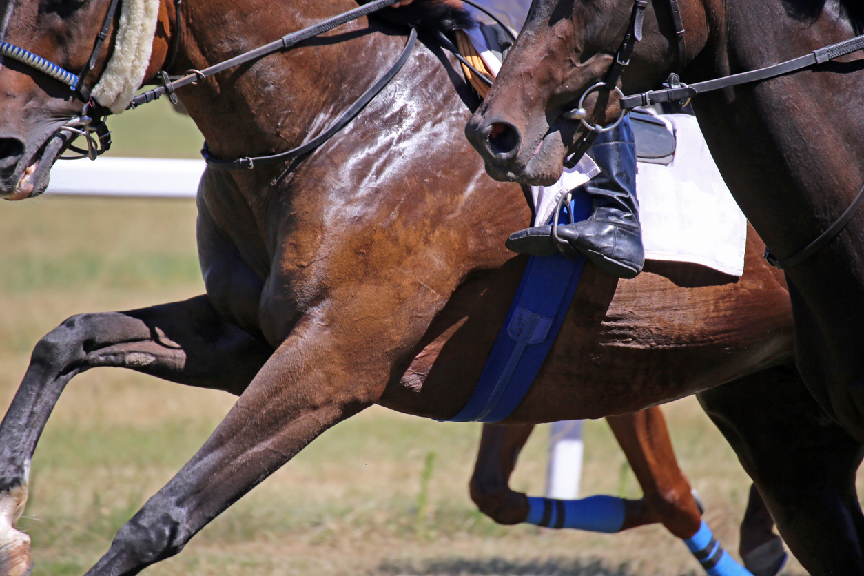 Article image for Drug-fuelled Magic Millions party turns violent at Chris Waller stables
