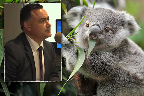 Government's koala policy scrapped in manner 'no one could have imagined'