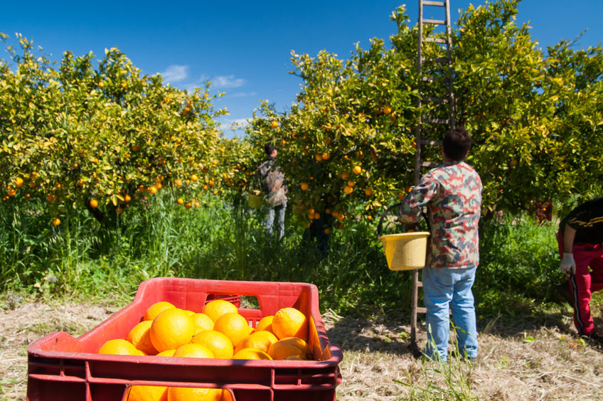 "Victoria signs on to bring in seasonal workers, but farmers say ""devil is in the detail"""