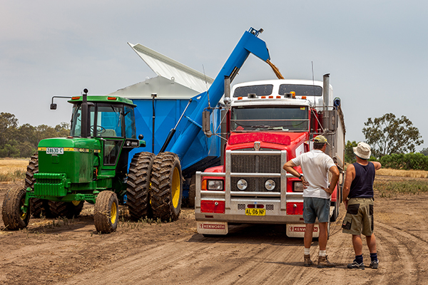 Article image for Safety concerns over grain trucks carrying this year's bumper harvest