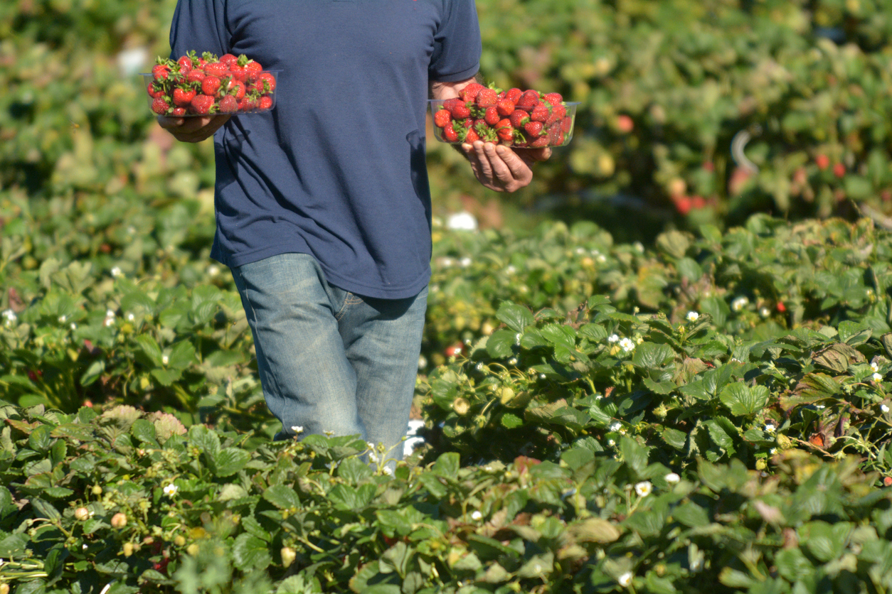 Article image for Farmers desperate for 'bureaucratic red tape' to be cut amid worker shortages