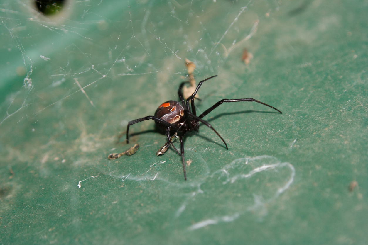 Article image for Bitten by a redback, stung by a jellyfish? Here's what you need to know