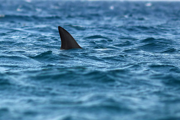 'Blood was just going everywhere': Survivor relives harrowing shark attack