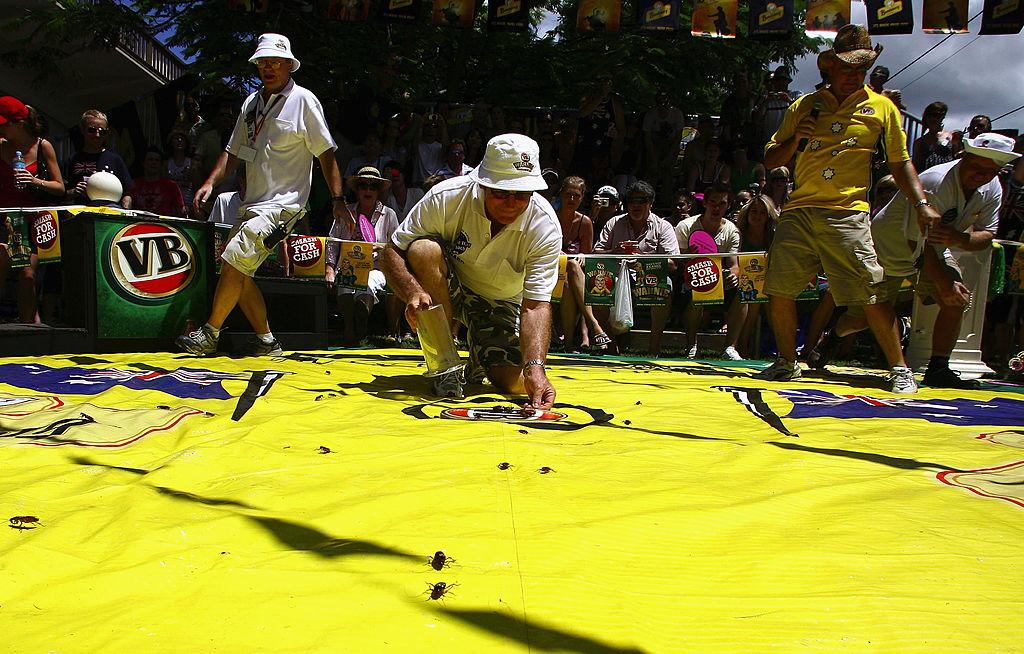 Brisbanites cheer on fastest roach to mark Australia Day